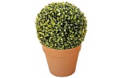 Topiary. Matting & Boxwood