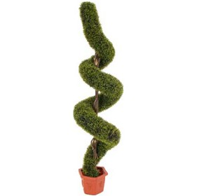 5ft 6in Spiral Grass Topiary
