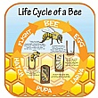 Life Cycle Of A Bee Sign