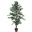 Ficus Benjamina Midnight Weeping Fig Tree - 6ft