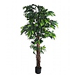 Mango Tree with Natural Stem - 6ft