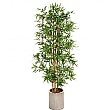6ft Japanese Bamboo with Natural Stems