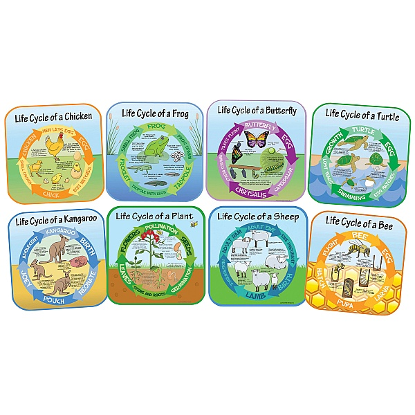 Life Cycle Full Set Of 8 Signs