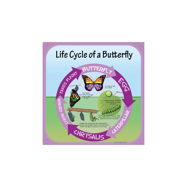 Life Cycle Of A Butterfly Sign