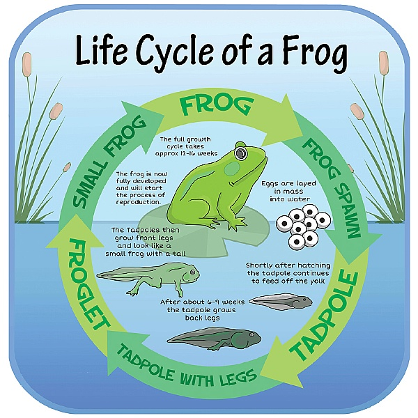Life Cycle Of A Frog Sign
