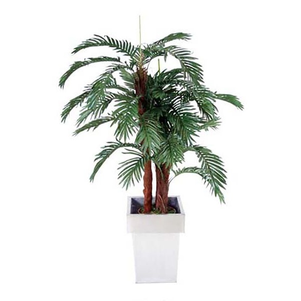Mini Palm - 4ft 6in