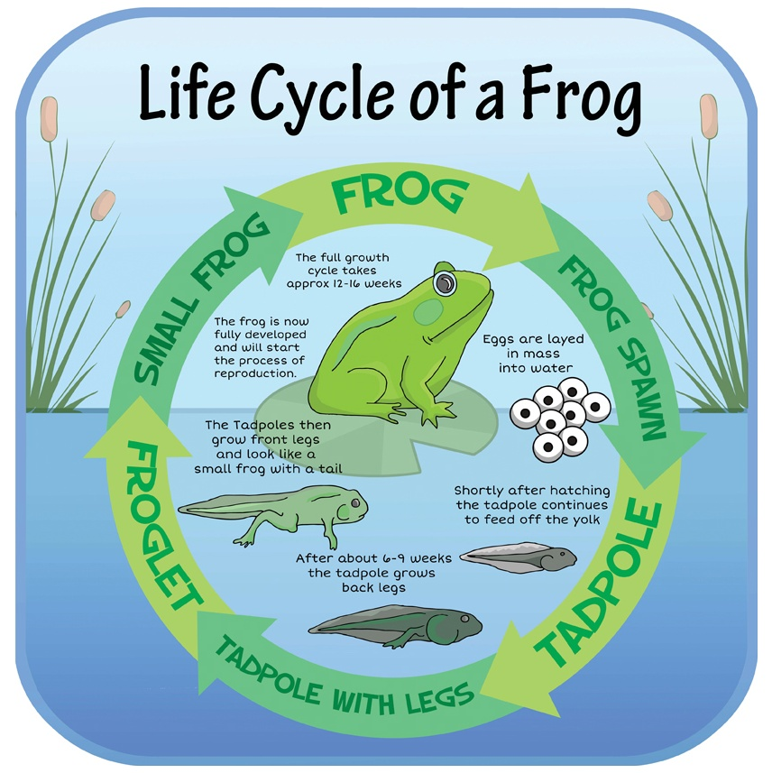 Life Cycle Of A Frog Sign Outdoor And Nature